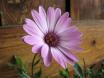 Amiga Flower