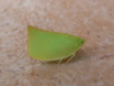 Leaf with legs!