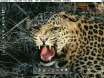 Leopard is available for Classic Amiga too